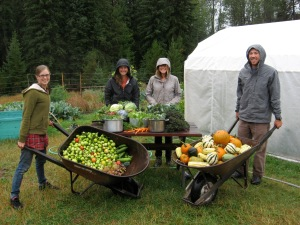 Photo taken by Leah Swartz.  Students harvest produce and serve dinner to over 30 community members.  From left to right: Laura Arvidson (Northwest Connections), Madeline Rubida (University of Montana), Chloe Bates (University of Vermont), Cody Dems (University of Montana)