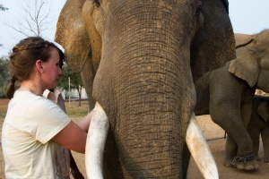 I got to feed an elephant!