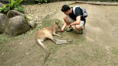 Feeding a kangaroo in Kuranda