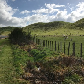 Pure New Zealand countryside