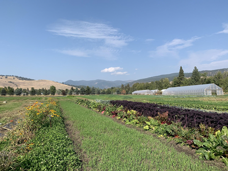 View of the Chard and Kale crops at the PEAS Farm